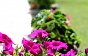 03.- Flores jardin